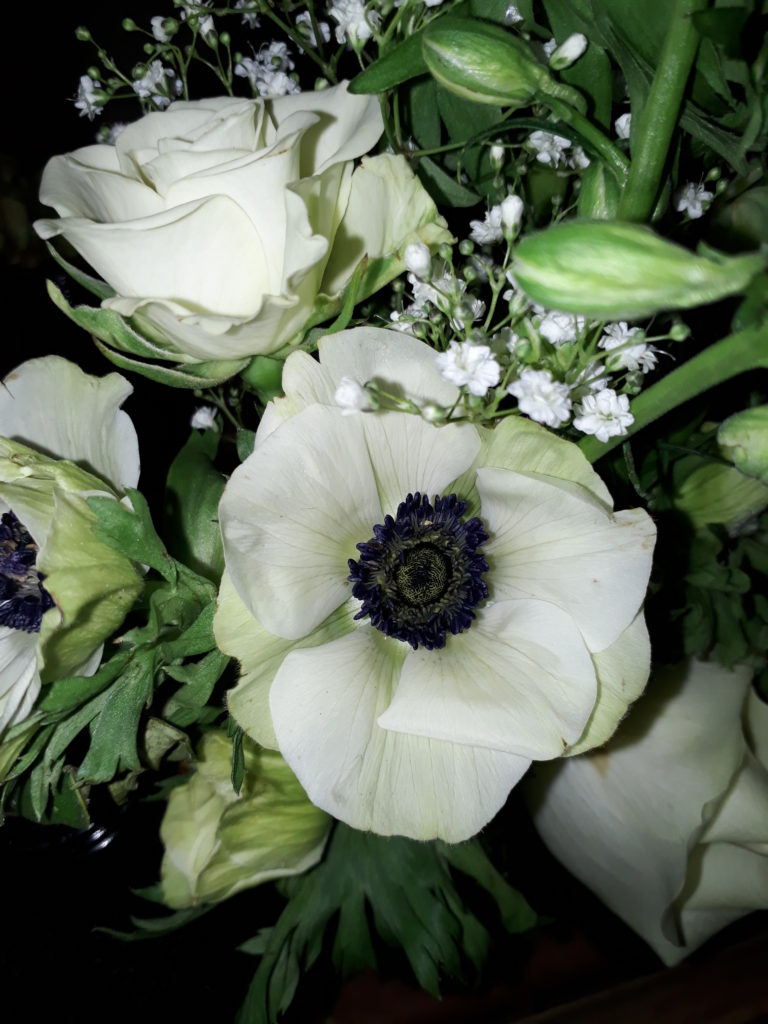 Love these anenomes with their dark bluey black middles