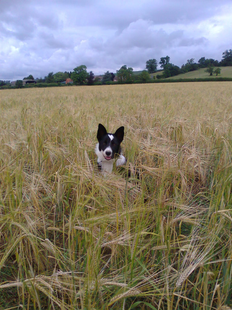 Dog eared - couldn't resist - Moss in the corn field while out helping me forage!